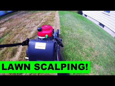 Scalping the Lawn after Killing It