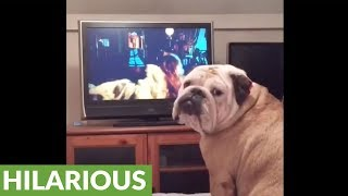 Bulldog frantically reacts to movie horror scenes