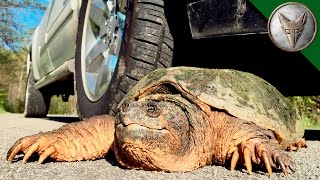 STOP! Save this Turtle?
