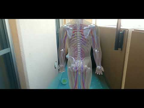 Mixed Reality anatomy education content using Google ARCore and Samsung Galaxy S8