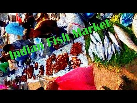 Indian village fish market youtube for Village fish market