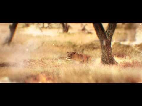 Vidéo Csat Lionne Cinema