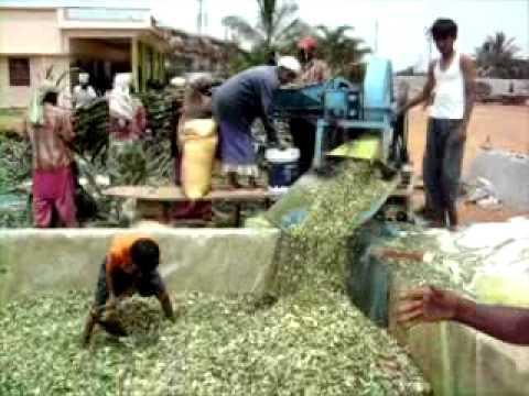 Silage Making in India- Kaiwara,Chikkballapur Dist., Karnataka,70 km from Bangalore