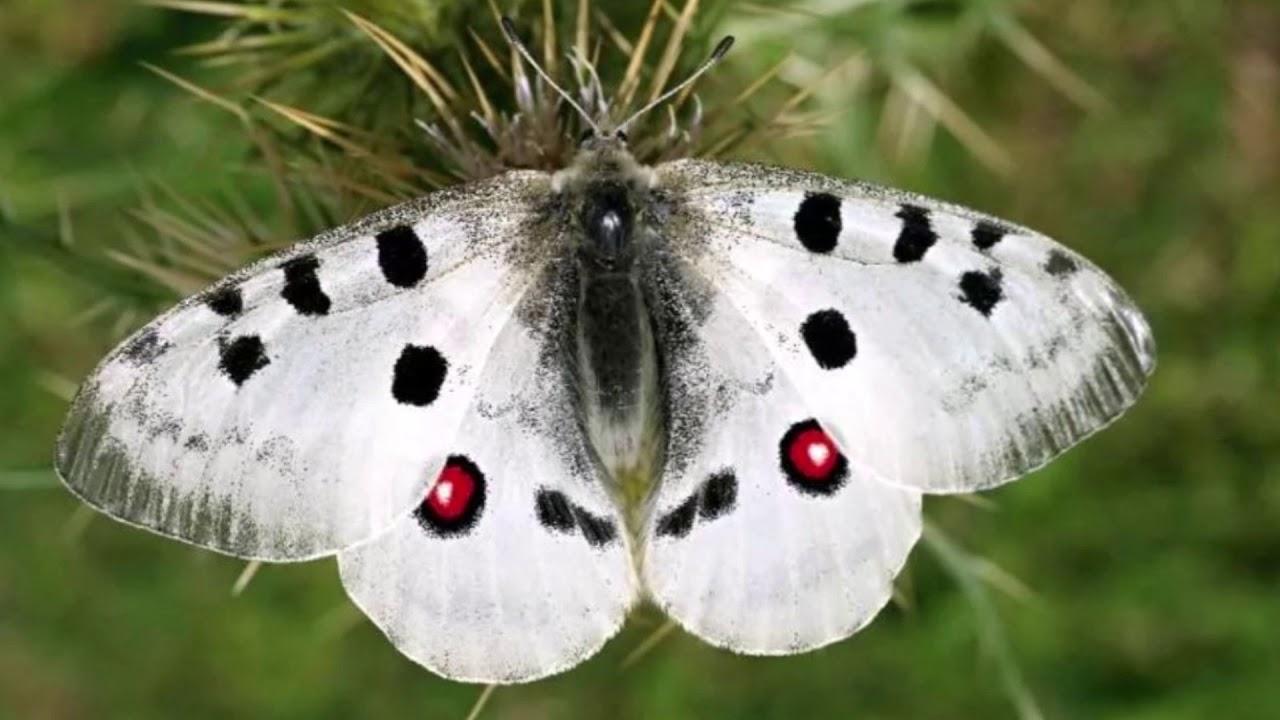 Цветы и бабочки - YouTube
