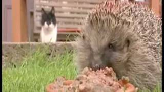 Watch Parry Gripp Overweight Hedgehog video