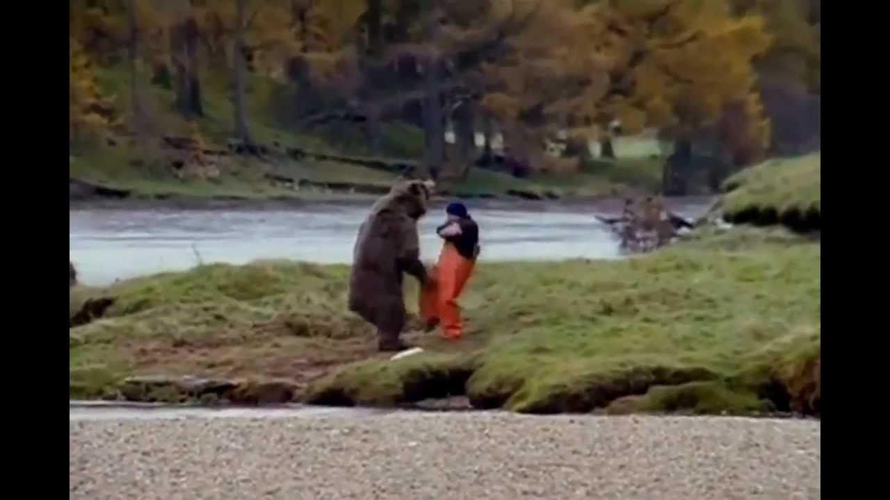 Man fist fighting bear