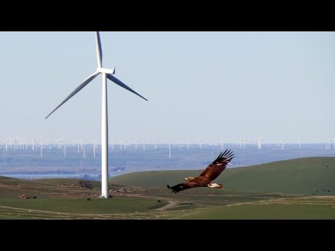 QUEST: Wind Energy vs. Eagles