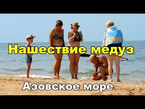 Вопрос: Почему в последние года увеличилось количество медуз на Азовском море?