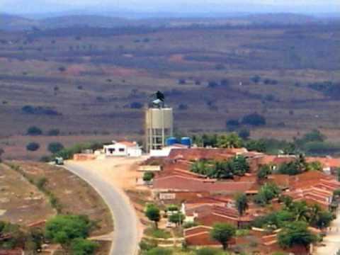 Cedro Pernambuco fonte: i.ytimg.com