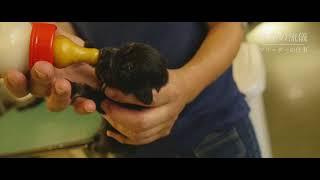 浜松市北区 アニマルファーム 小型犬ブリーダー ドキュメンタリー
