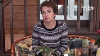Уход за декабристом в домашних условиях, пересадка и размножение (видео инструкция)