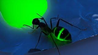 Я покрасил муравьев! Муравьи светятся в темноте!