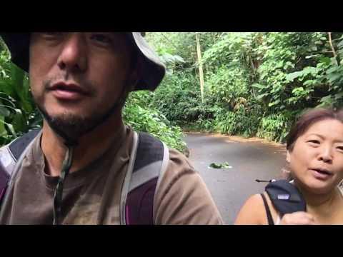 Manoa Falls Trail 11/22/2017 [HD]