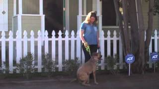 The Good Dog Minute 5/16/13: Vallejo Update And Laura's Special Video Treatment!