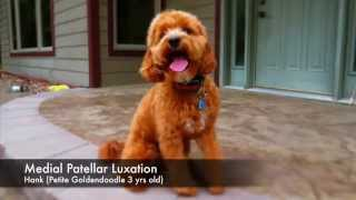 What Does Medial Patellar Luxation Look Like In A Dog?