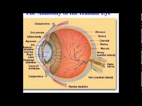 Parts of the eye and its function youtube parts of the eye and its function ccuart Image collections
