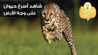 اسرع حيوان بالعالم شاهد السرعة الخارقة Youtube