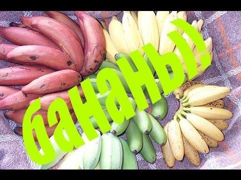 Виды вегетарианства, польза и вред вегетарианского питания