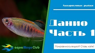 видео Aquamegamall.ru - товары для аквариумистики и пруда. Самый широкий выбор в интернете.