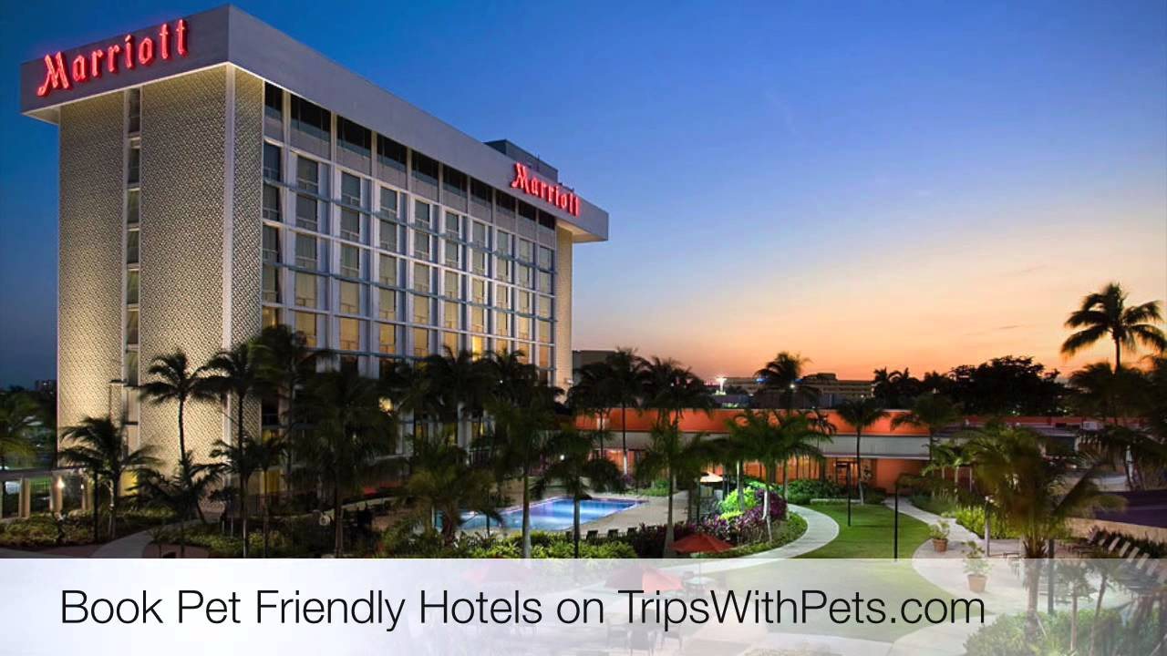 Pet Friendly Hotels Austin Texas