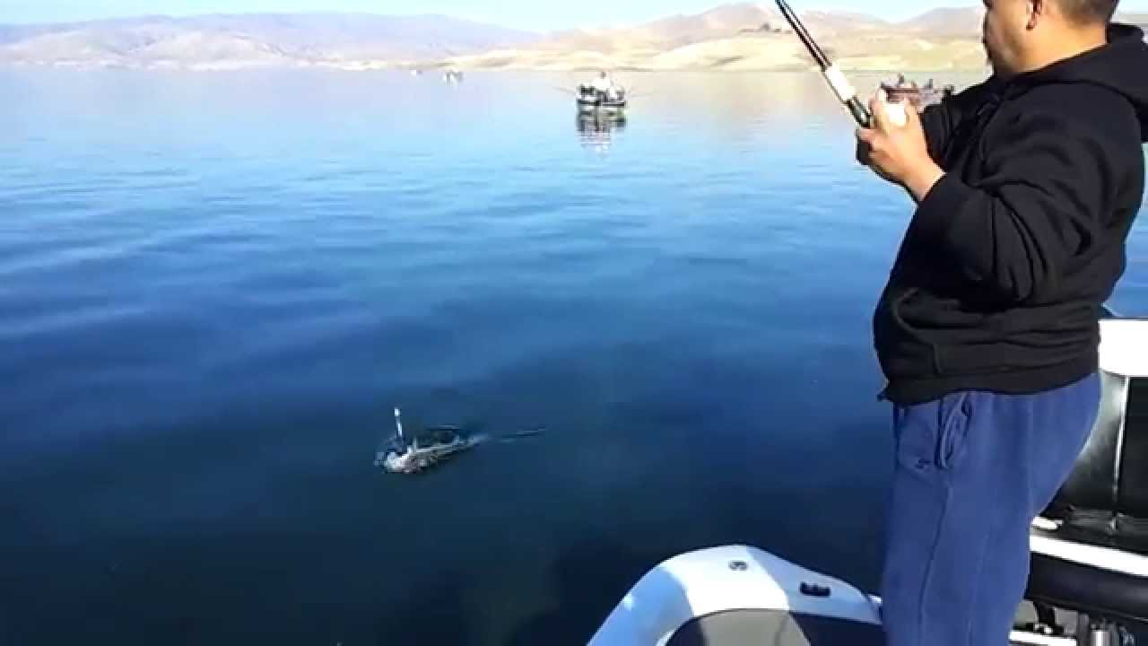 Striped bass fishing at san luis reservoir 11 3 12 youtube for San luis reservoir fishing