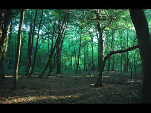 a walk in the forest DIANA KRALL - ISN'T THIS A LOVELY DAY