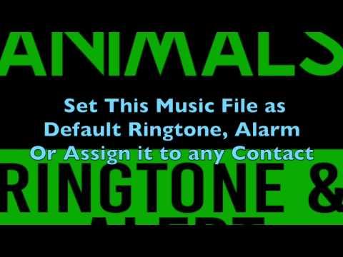 Animals Maroon 5 Ringtone and Alert