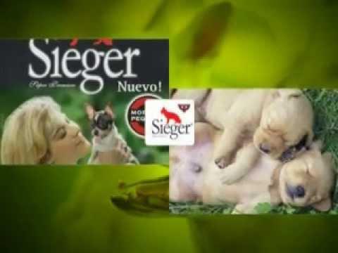 """Download Pauta Publicitaria Sieger """" Dale Uno Bueno... dale Sieger"""""""