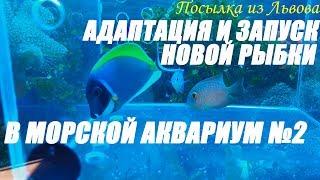 Посылка из Львова.  Адаптация и запуск новой рыбки в морской аквариум №2.