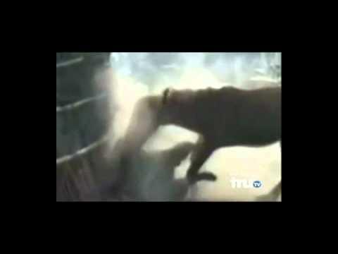 HORSEBASTARD - SHORT CONTROLLED BURSTS