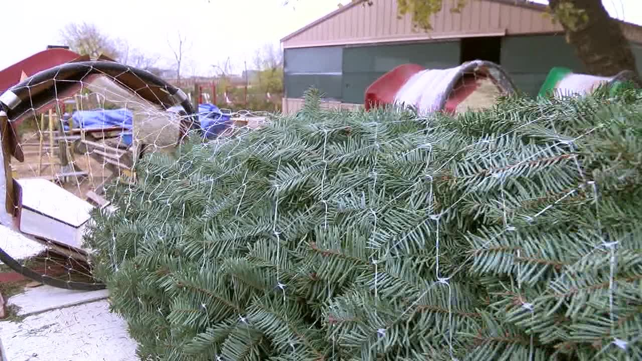 owasso christmas tree farm open after 35 years - How To Start A Christmas Tree Farm