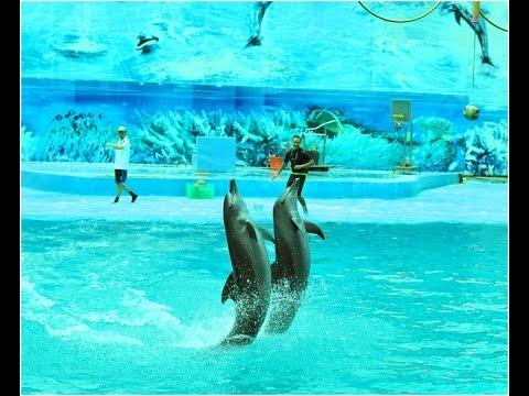 Biểu diễn cá heo – Suối Tiên