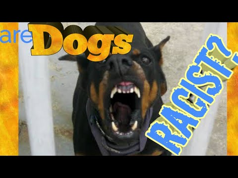 Doberman Pinscher Vlog - Are Dogs Racist?