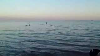 Урзуф 2012(Азовское море УРЗУФ 2012 ГОД., 2015-03-25T17:29:48.000Z)