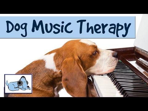 music-to-relax-your-dog---dog-music-therapy