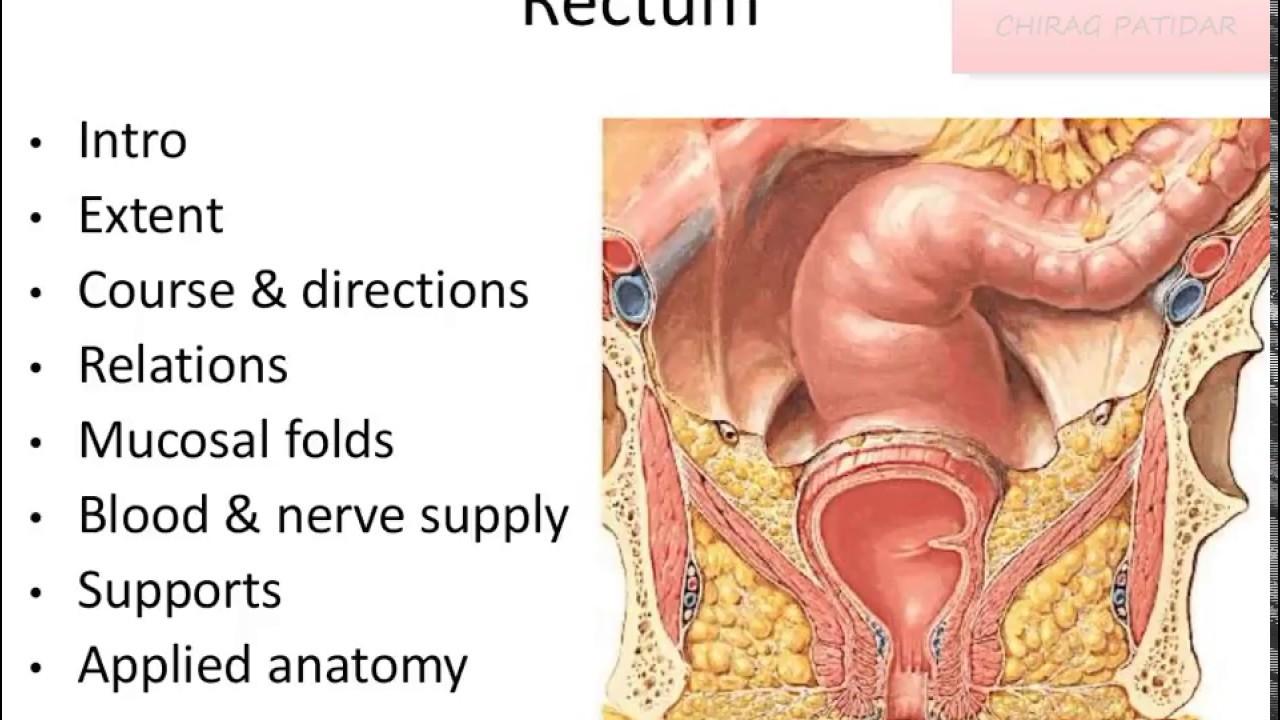 Anatomy of Rectum - YouTube