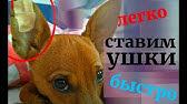 Собаки и щенки породы английский бульдог. На сервисе объявлений olx. Ua украина легко и быстро можно купить щенка английского бульдога. Заведи.