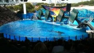 Tilikum refuses to perform during One Ocean killer whale show at SeaWorld 04-23-2011
