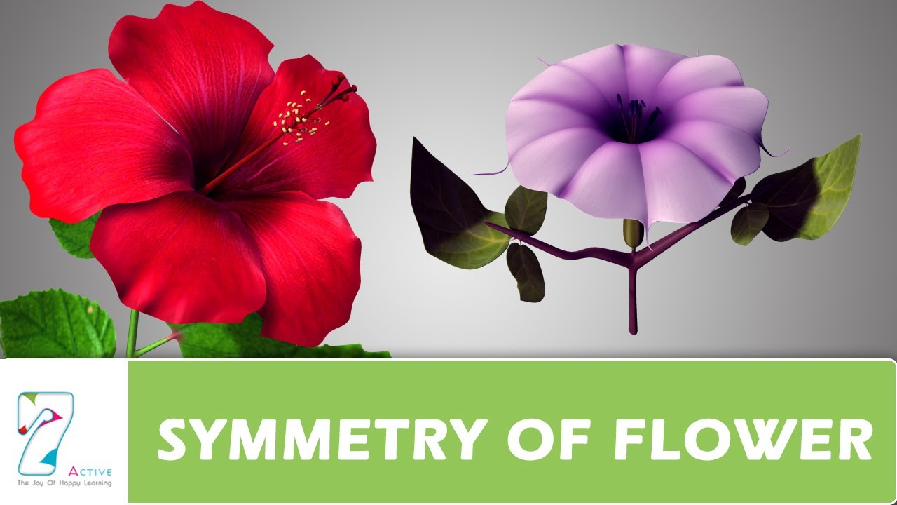 Symmetry Of Flower Youtube