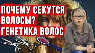 Почему секутся волосы. Генетика и память волос.(, 2016-10-07T08:24:16.000Z)