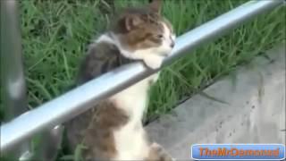 Popular Videos - Felinae & Dogs