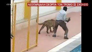 Βίντεο σοκ: Λεοπάρδαλη εισβάλλει σε σχολείο! - MEGA ΓΕΓΟΝΟΤΑ