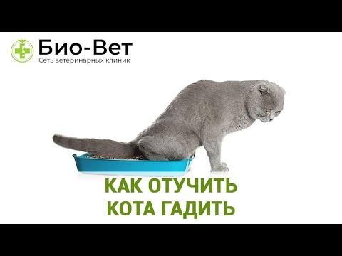 Как Отучить Кота Гадить �� Советы Ветеринара // Сеть Ветклиник БИО-ВЕТ