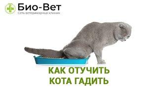 Как отучить кота гадить. Ветеринарная клиника Био-Вет.