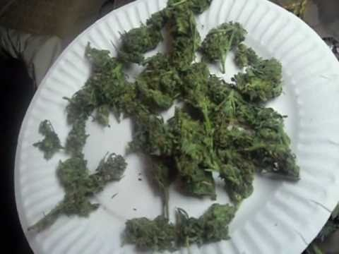 420 Soldiers: Pack Ur Bowls