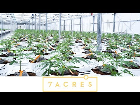 7ACRES by Supreme Cannabis Company