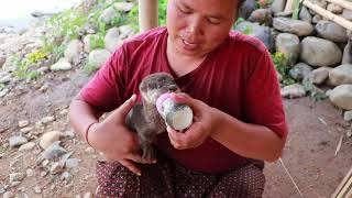 survival in the rainforest-Found crocodile egg with pumpkin for cook -Eating delicious HD