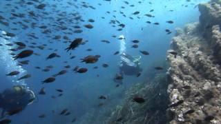 Bormes Plongee castagnoles dans le courant