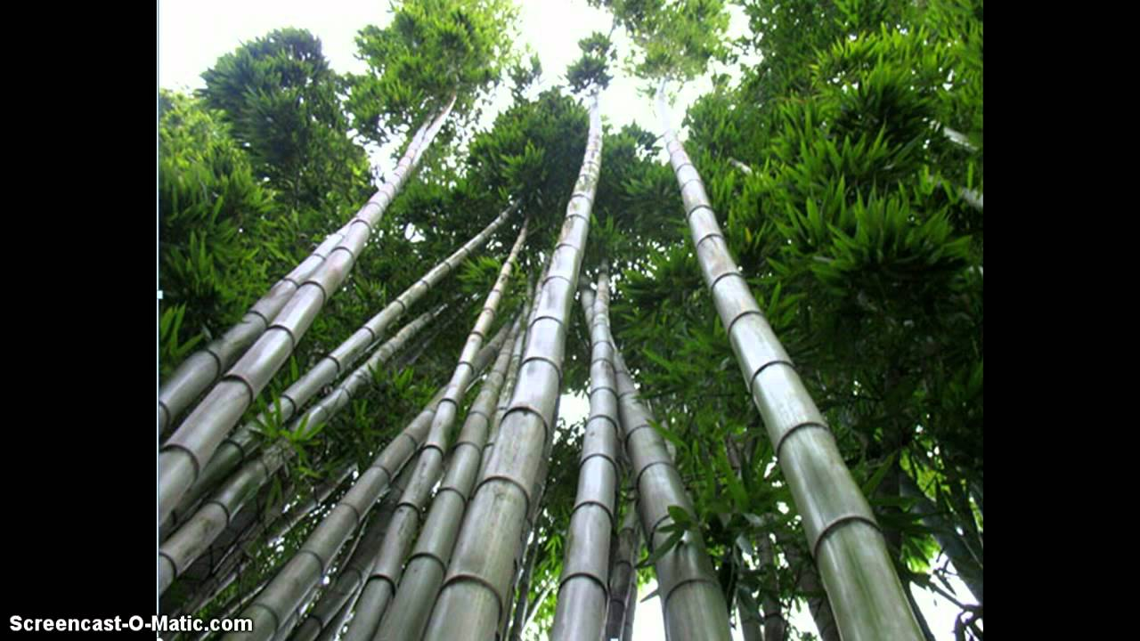 how to get rid of bamboo roots