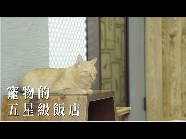 寵物的五星級飯店!|商業空間|Take a C|動態錄影| # Shop